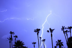Palms Trees and  Lightning Thunder Storm Stock Photos