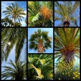 Palms Trees Mosaic Royalty Free Stock Image
