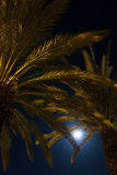 Palms trees on night time. Palms with moon on sky on night time Stock Photos