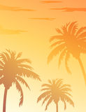 Palms trees summer sunset tropical background Royalty Free Stock Photo