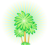 Palms Trio Royalty Free Stock Image