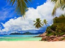 Palms on tropical beach Stock Photography