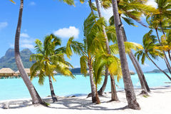 Palms at a tropical beach Stock Images