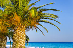 Palms on tropical beach Royalty Free Stock Images