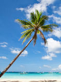 Palms on tropical beach Royalty Free Stock Photos