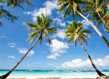 Palms on tropical beach Royalty Free Stock Image