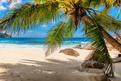 Palms and tropical beach with white sand. stock photo