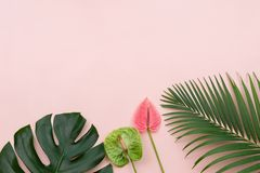 Palms and tropical flowers stock image