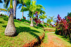 Palms in tropical garden . Garden Of Eden, Maui Hawaii Stock Photos