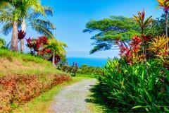 Palms in tropical garden . Garden Of Eden, Maui Hawaii Royalty Free Stock Image