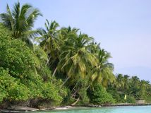 Palms on a tropical island. A palms group in a tropical island Stock Image