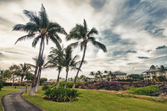 Palms and tropical scenery in Hawaii Royalty Free Stock Photos
