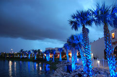 Palms under blue light. Nightshot of lakefront with palms stock photo