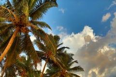 Palms under blue sky Royalty Free Stock Image