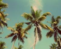 Palms under blue sky - vintage retro style. Branches of coconut palms under blue sky - vintage retro style Royalty Free Stock Photos