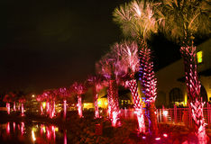 Palms under red light Royalty Free Stock Photography