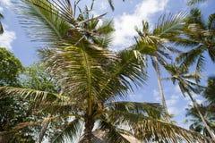 Palms under sky Stock Photo