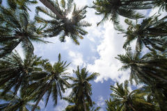 Palms under sky Royalty Free Stock Photos