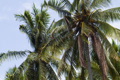 Palms under sky Royalty Free Stock Photography