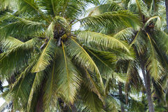 Palms under sky Royalty Free Stock Image