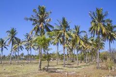 Palms under sky Stock Photography