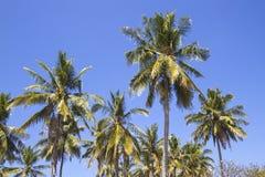 Palms under sky Royalty Free Stock Photos