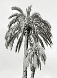 Palms under snow Stock Photos