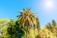 Palms under the Sun Plants Foliage Stock Photos