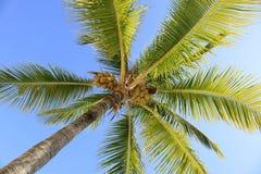 The Palms at Vidanta Riviera Maya Stock Images