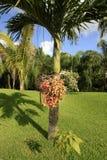The Palms at Vidanta Riviera Maya. The Palms at Vidanta Grand Luxxe, The Grand Bliss, Mayan, Palace and Bliss Riviera Maya Mexico stock image