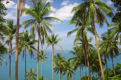 Palms view Royalty Free Stock Photo
