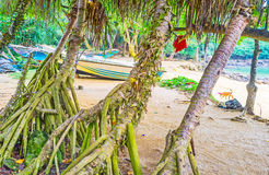 Through the palms. The view on the boats on Jungle Beach through the palm trees, Unawatuna, Sri Lanka royalty free stock photos