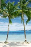 Palms. View of nice tropical beach with some palms around royalty free stock photo