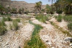 Palms in Wadi Bani Khalid. On the way to Wadi Bani Khalid, Oman royalty free stock photography
