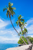 Palms on the wall. Palm trees grow out of the seawall in Hawaii Stock Images