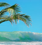 Palms and waves Stock Photography