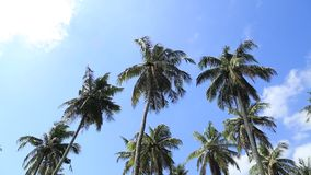 Palms waving in wind. A video of tropical palm trees waving in the breeze stock footage