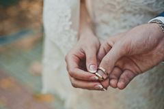Palms with wedding rings 2374. Newly-married couple holds rings on fingers Royalty Free Stock Photo