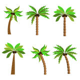 Palms on a white background. Diversity of trees set on white stock illustration