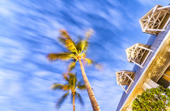 Palms at the wind, Key West.  stock photos