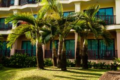 Palms on yard of tropical resort. Green lush palms growing on meadow in front of hotel, Thailand royalty free stock images