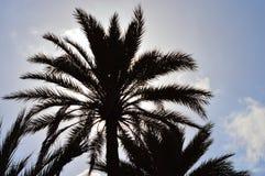 Palmschaduw Stock Fotografie