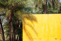 palmschaduw op een gele muur - de zomerachtergrond royalty-vrije stock afbeeldingen