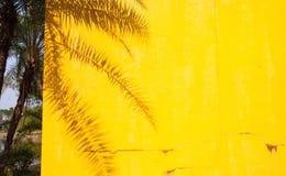 palmschaduw op een gele muur - de zomerachtergrond stock foto
