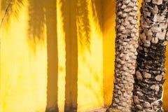 palmschaduw op een gele muur - de zomerachtergrond stock fotografie