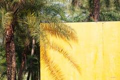 palmschaduw op een gele muur - de zomerachtergrond stock afbeelding