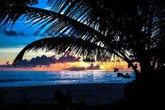 Palmschaduw in zonsondergang Stock Fotografie