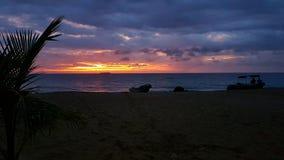 Palmsilhouet in zonsondergang royalty-vrije stock afbeeldingen