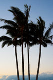 4 palmsilhouetten tegen een Zon Plaatsende Achtergrond Royalty-vrije Stock Foto