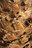 palmskin Immagini Stock